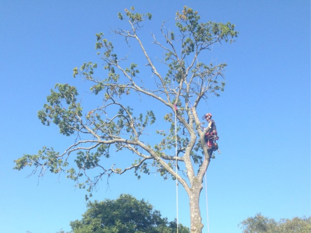 Tree Surgeons Purbeck Dorset